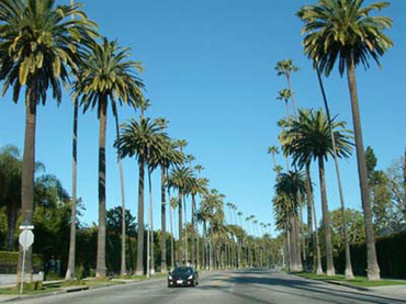 City_of_beverly_hills